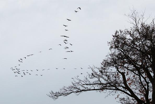 cranes-534914_960_720