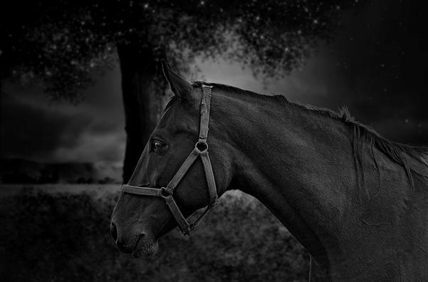 horse-3442669_960_720