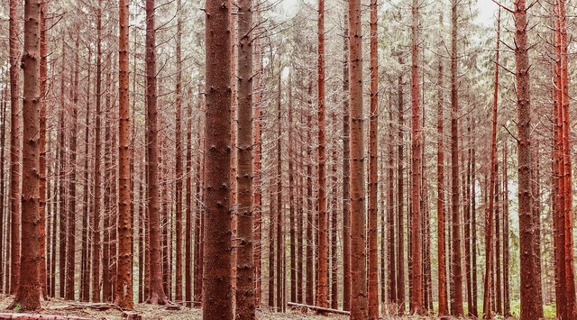 forest-trees-1149586_960_720
