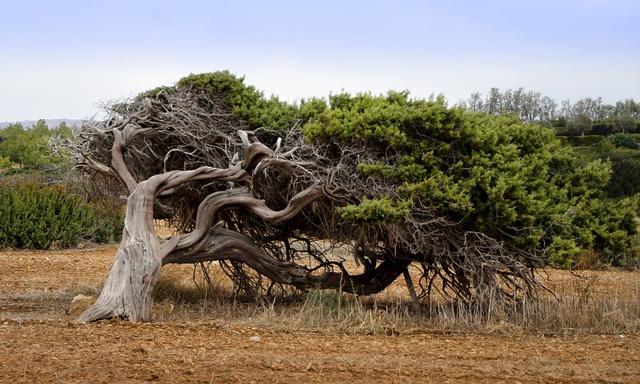 tree-3879327_960_720