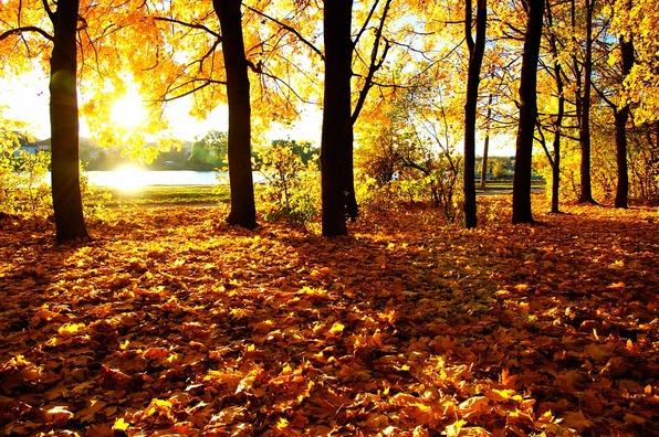 autumn-4460722_960_720