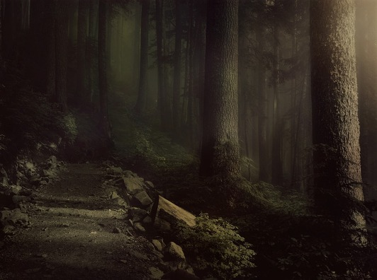 forest-4217216_960_720