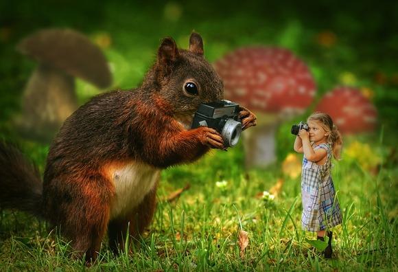 squirrel-3158846_960_720