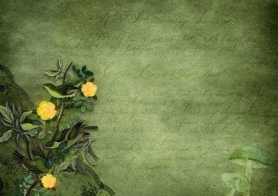flowers-3590434_960_720