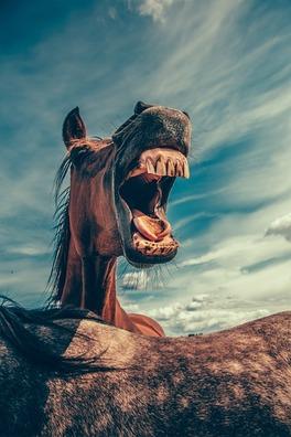horse-868971_960_720