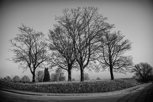 grove-of-trees-4800254_960_720