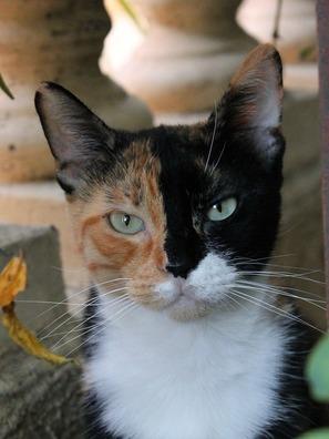 cat-3664711_960_720