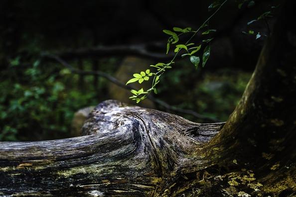 tree-3800597_960_720
