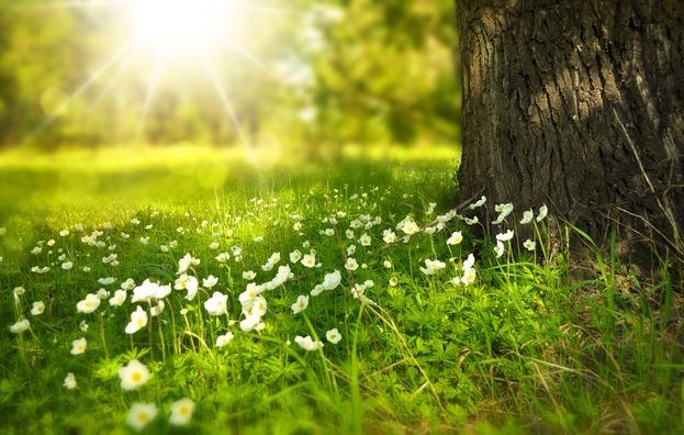 spring-276014_960_720