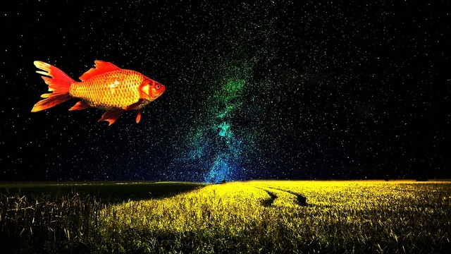goldfish-1229772_960_720