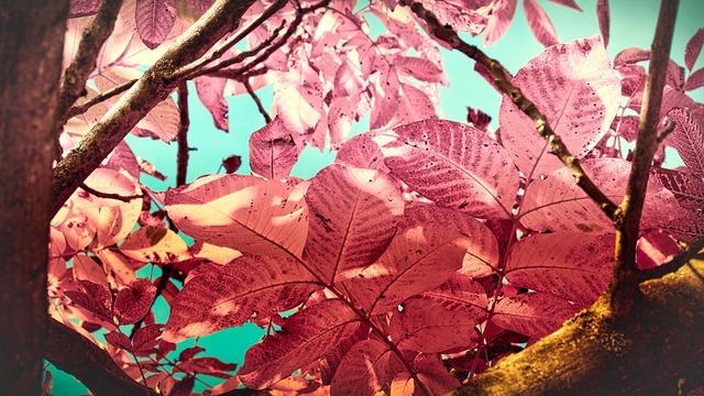 leaves-3735814_960_720