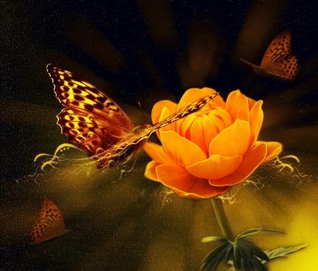 flower-805097_960_720