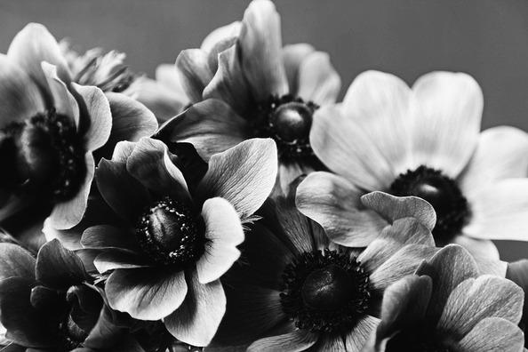 anemone-4567593_960_720