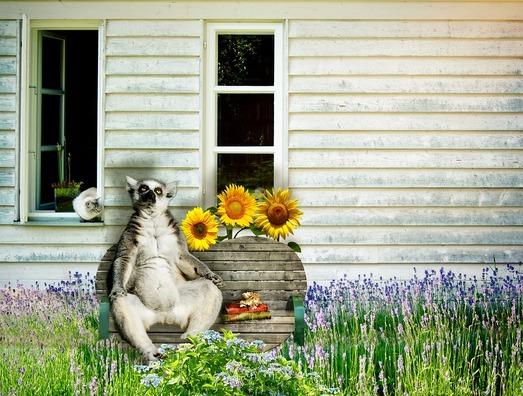 lemur-2861922_960_720