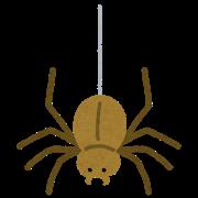 bug_kumo_ito