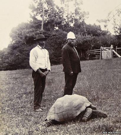 1900年撮影の写真にも写ってる世界最高齢の「ジョナサン」とかいうゾウガメwwwwww