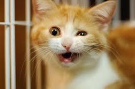 猫型貯金箱を見たときの猫の反応wwwwwwwwwww
