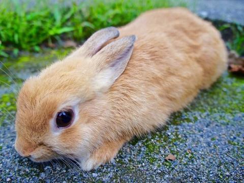 pipi_rabbit_ranking_800