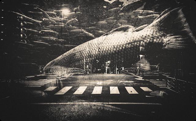 都会を泳ぐ魚