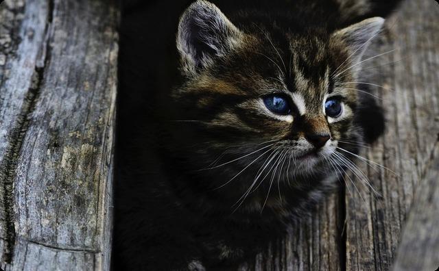 飼ってた子猫がポットン便所に落ちてしまった。泣き声はすれど、物凄く深くて底まで見えない・・・ → 父「このヒモ、垂らしてみるか...」→ すると・・・
