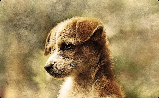 凛々しい犬