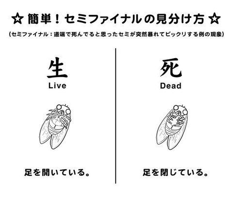 【セミファイナル】