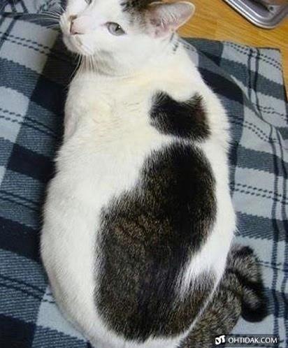 【ネコ柄の猫】