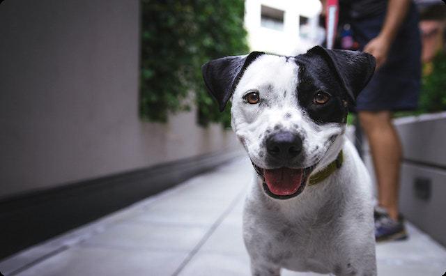 いつもは大人しくて可愛い犬が、完全に野生に返った顔で吠え出し、しきりに隣家に行こうとする → 仕方なく隣家の様子を見に行ってみると、そこには衝撃の光景が・・・