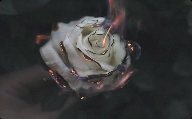 燃え落ちる花