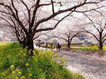 東松山農林公園2