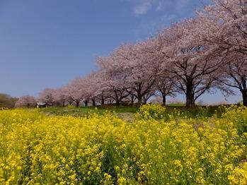 東松山農林公園1