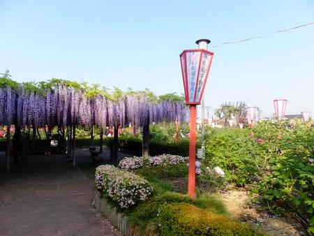 ぼたん園�