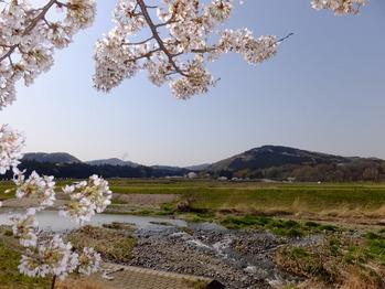 嵐山町都幾川桜1