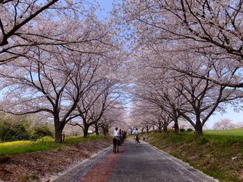 東松山農林公園3
