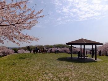 東松山農林公園4