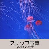 TOPアイコン-04-スナップ写真-170
