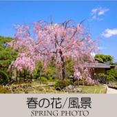 TOPアイコン-07-春の花風景-170
