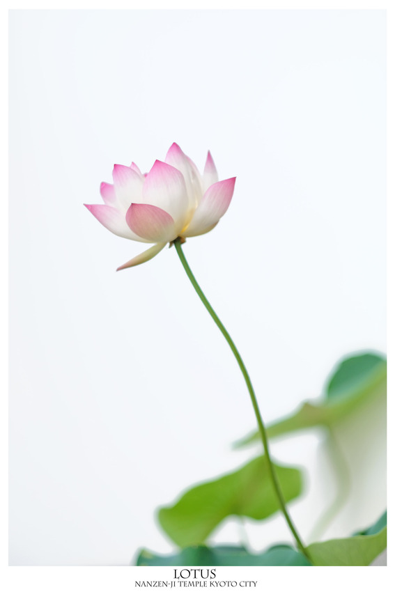 2019071001-ハス南禅寺-3000-DSCF9437