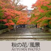 TOPアイコン-09-秋の花風景-170