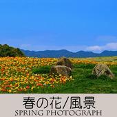 アイコン-800-800(春の写真)-A