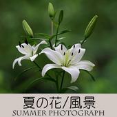 アイコン-800-800(夏の写真)-A