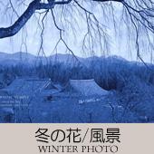 TOPアイコン-10-冬の花風景-170