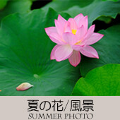 TOPアイコン-08-夏の花風景-170