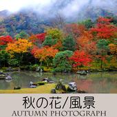 アイコン-800-800(秋の写真)-A