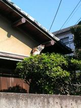mokugeki_1