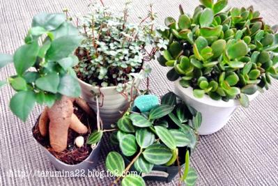 fc2blog_201209230950102dd.jpg