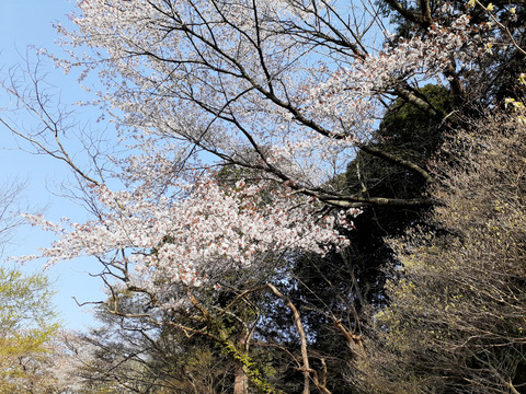 2020-4-9波瀬植物園 (1)