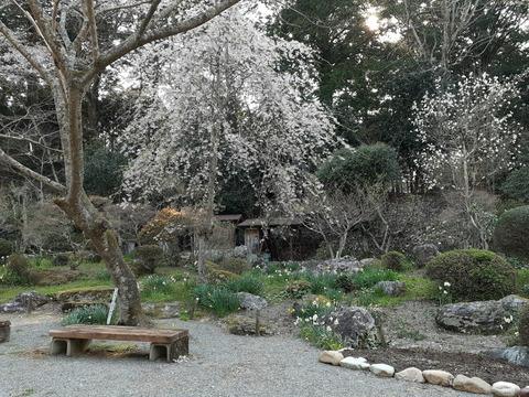2020-4-9波瀬植物園2 (4)