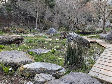 2020-4-9波瀬植物園2 (1)