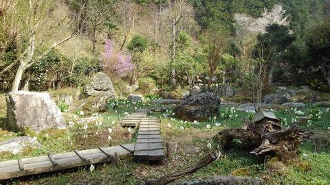 4波瀬植物園水芭蕉